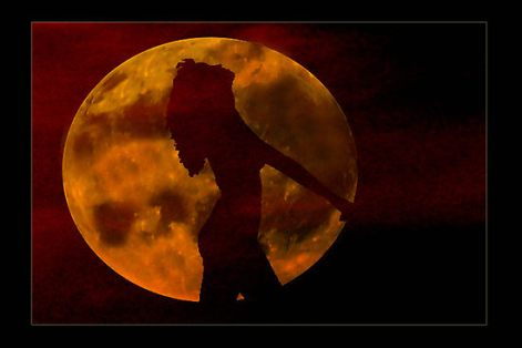 188041-11-moondance